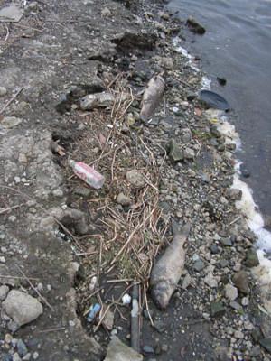 2004年4月26日(月)の亀甲橋下の様子(撮影:TRネット)