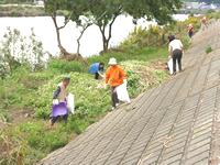 綱島バリケン島付近、高水敷での活動風景