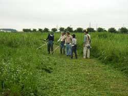 高水敷の植生回復作業