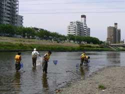 川に入って生きもの調査
