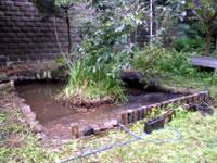 ビオトープ池の再生 AFTER