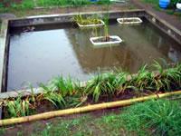 完成したビオトープ池