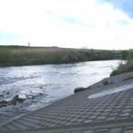 アユの遡上を確認した亀の甲橋付近の鶴見川 当日の様子