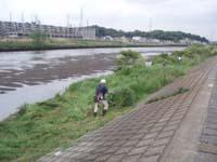 綱島高水敷・寄州
