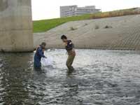 川に生息する魚類の調査