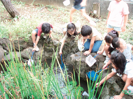 「エコシティたかつ」の「学校流域プロジェクト」 ビオトープ学習のようす