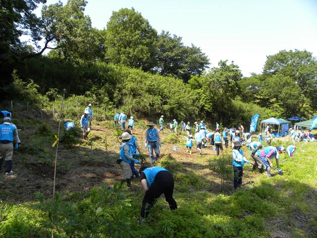 植樹エリアに繁茂していたカナムグラの草刈りもオマケで実施。あっという間に終わりました。スゴイ!