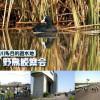 鶴見川多目的遊水地 野鳥観察会