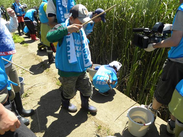 AQUA SOCIAL FES!! 2012 PROGRAM17 みんなの鶴見川流域プロジェクト 第6回 綱島川辺アレチウリ退治とバイオブリッツ