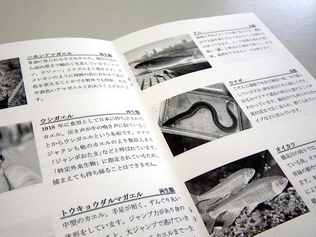 付属の図鑑には、鶴見川流域の生きもの計44種類の写真と解説を掲載!生きものカルタといっしょに楽しく学んで、鶴見川の生きもの博士を目指そう!