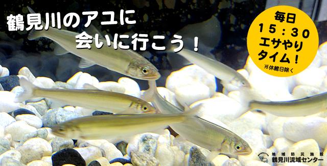鶴見川のアユ展示中!!(6月2日から10月14日まで)