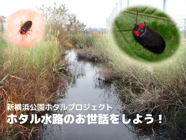 11月17日(日)ホタル水路のお世話をしよう!<新横浜公園ホタルプロジェクト>